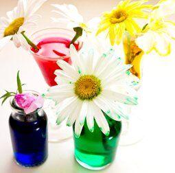 Esperimenti scientifici per bambini - Coloriamo le margherite 1