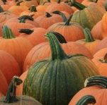 Halloween 120 e più idee creative halloween-23