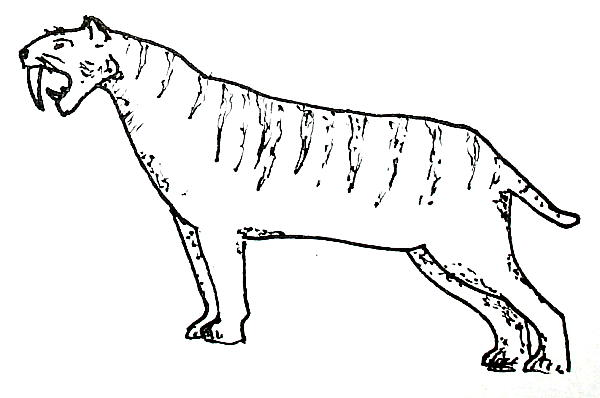 Disegni da colorare la comparsa dei viventi sulla terra for Immagini tigre da colorare