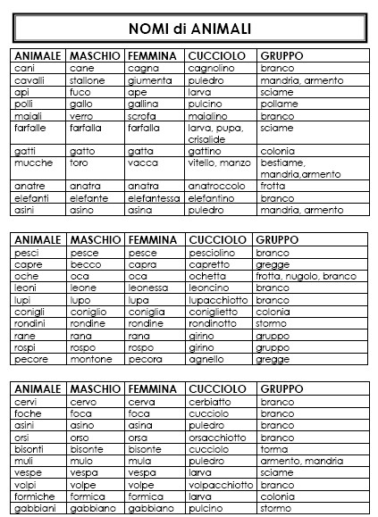 Psicogrammatica montessori nomi di animale lapappadolce for Nomi per tartarughe femmine