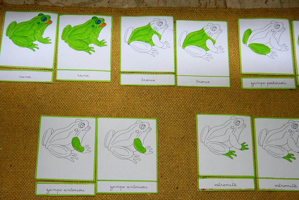 incastro della rana 15