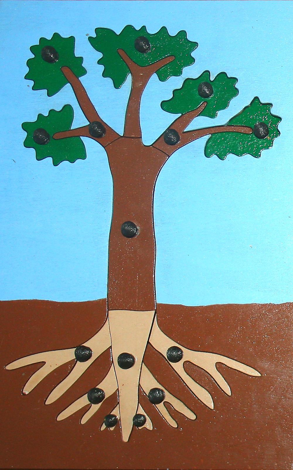 incastro pianta Montessori 2