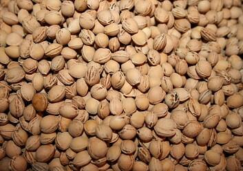 noccioli di ciliegia, pula di farro e semi di lino - lapappadolce - Cuscino Con Noccioli Di Ciliegia Come Fare