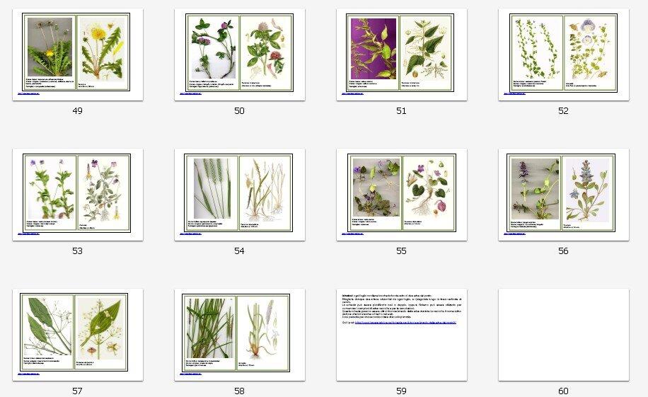 Schede per il riconoscimento delle erbe del prato