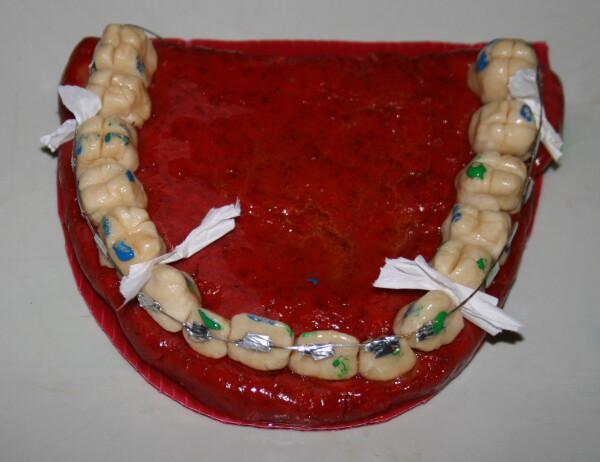 modello-denti-con-play-dough151