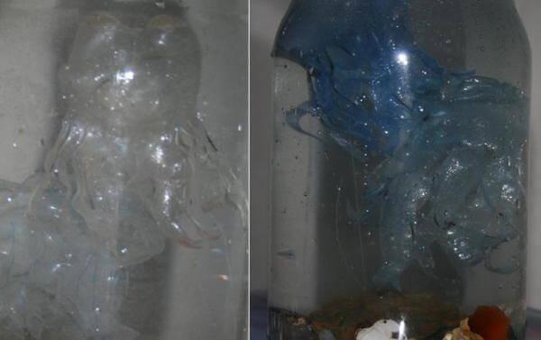 meduse-di-pet