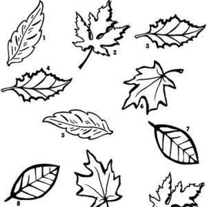 lavoretti per l'autunno 110 e più progetti creativi da realizzare coi bambini 58