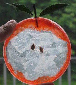 lavoretti per l'autunno 110 e più progetti creativi da realizzare coi bambini autunno fetta-di-mela