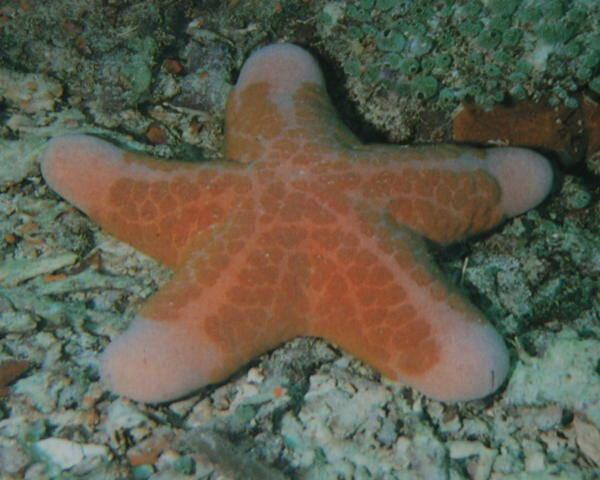Le stelle marine carte delle nomenclature Montessori