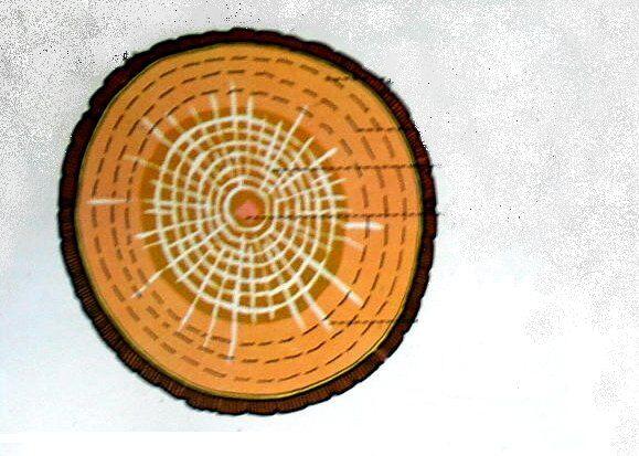 sezione di tronco di quercia