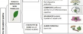 LA CLASSIFICAZIONE DELLE PIANTE scheda riassuntiva