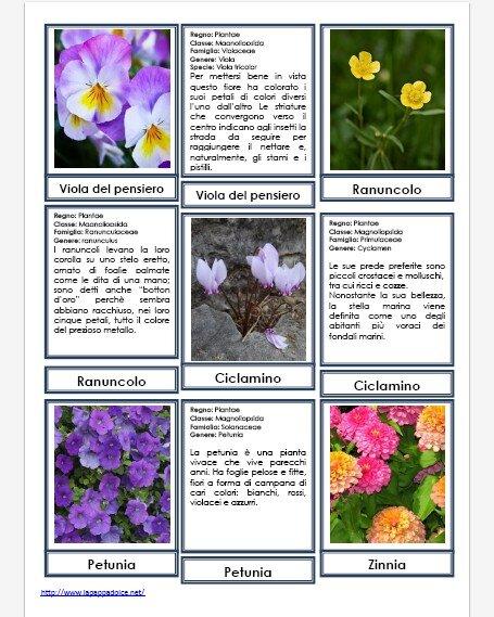 Disegni da colorare FIORI con scheda didattica e nomenclature Montessori