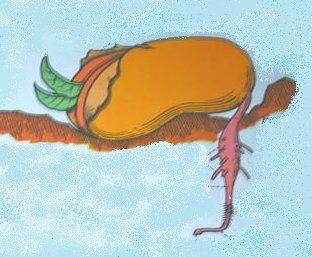 germinazione del fagiolo