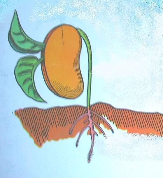 il seme si solleva