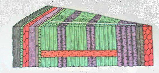 sezione del tronco