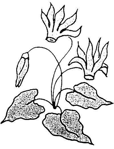 disegni da colorare fiori di montagna