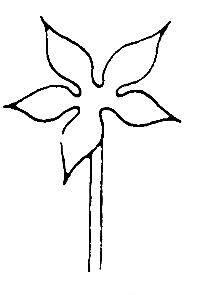 il fiore 5
