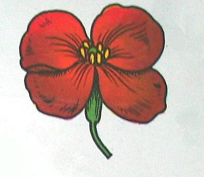 CRUCIFERE (violaciocca) 4 petali e 4 sepali disposti a croce
