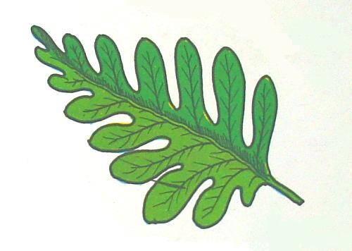 felci: con radici, fusto, foglie