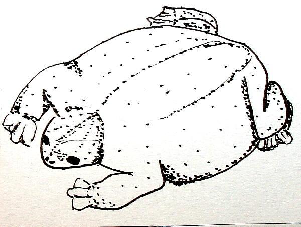 MYOBATRACHUS 3