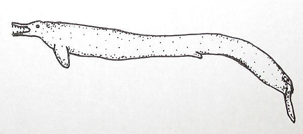 basilosaurus 166