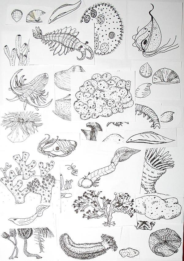 cambriano 194