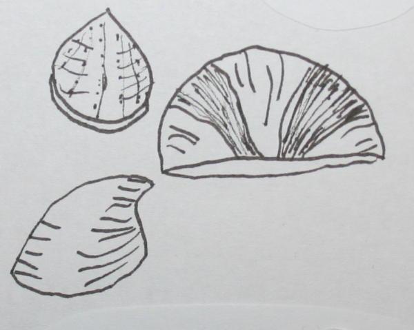 brachiopodi