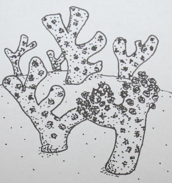 cambriano briozoi 34