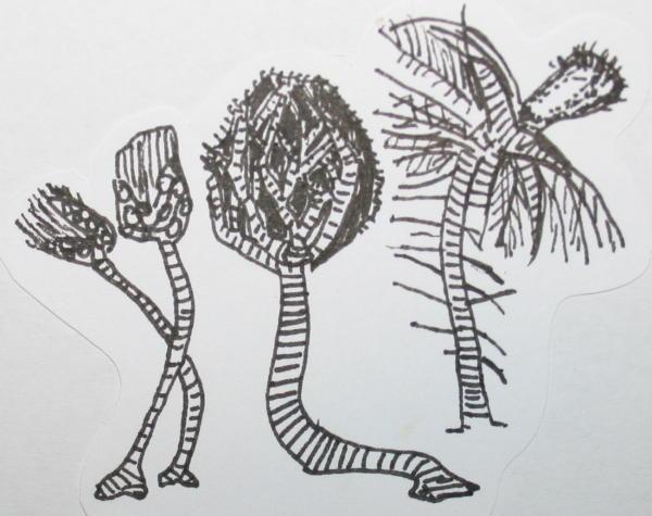 cambriano crinoidi 36