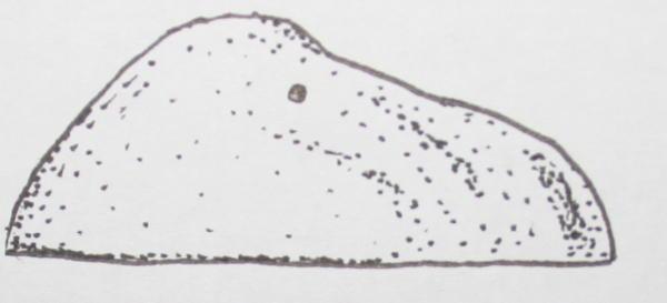 cambriano scenella 40