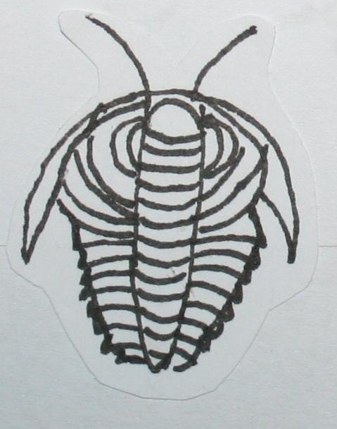 cambriano trilobiti 43