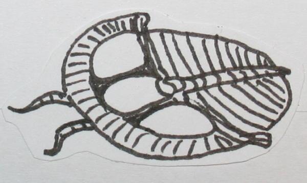 cambriano trilobiti 44