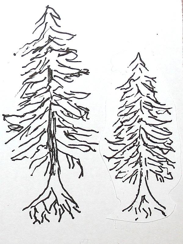 conifere 89