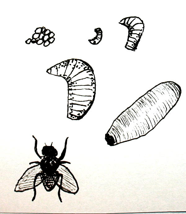insetti 6
