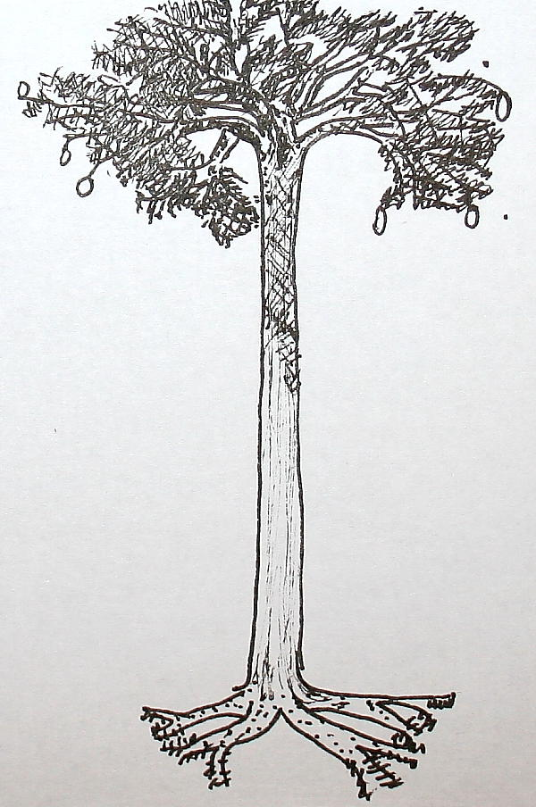 lepiodendron 90