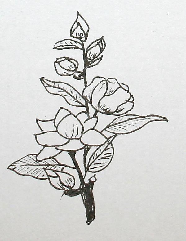 magnolie 167
