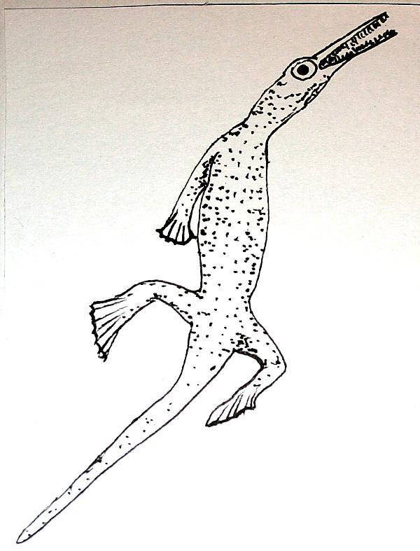 mesosauro 7