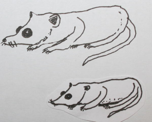 primi mammiferi 121