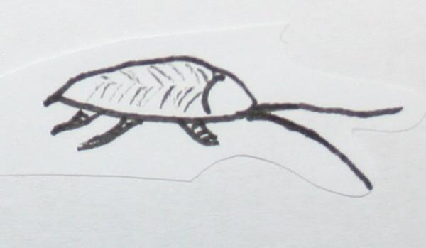 scarafaggi 95
