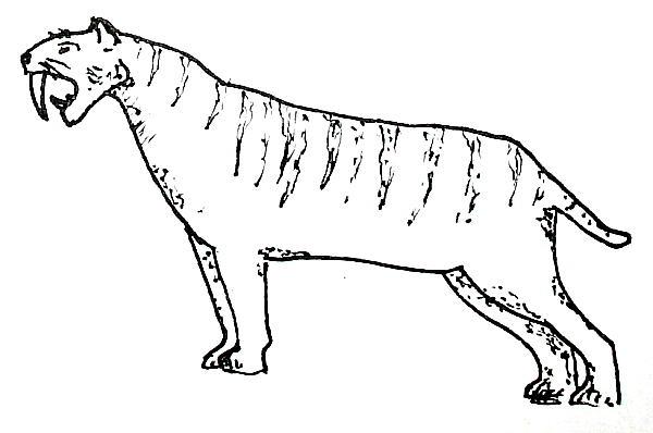 smilodonte 177