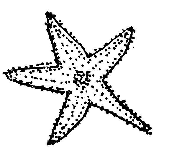 stella marina 59