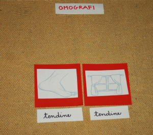 omografi Montessori 18