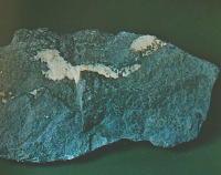 arsenico 9