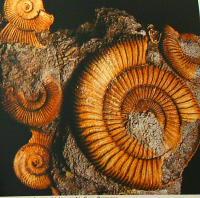 calcare fossilifero 241