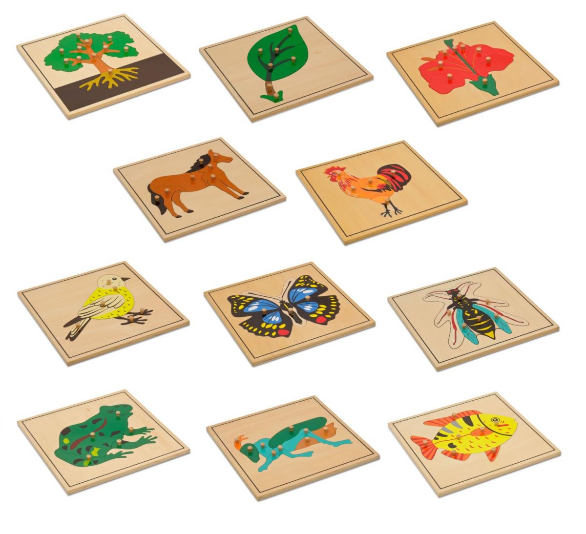11 puzzle biologia
