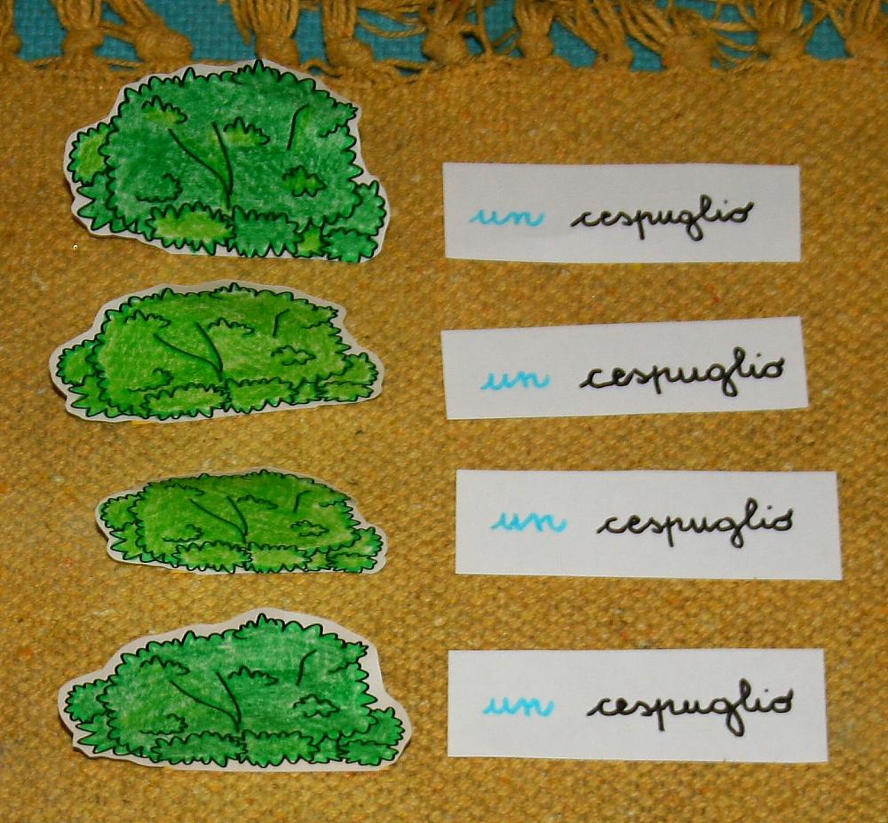 plurale articoli Montessori 2