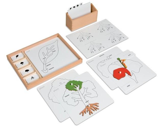 Botanica Montessori: incastro della foglia