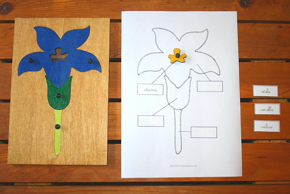 incastro del fiore Montessori 14