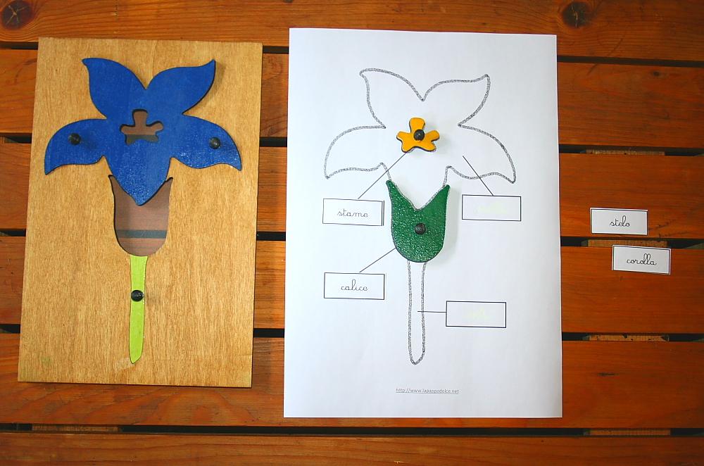 incastro del fiore Montessori 15