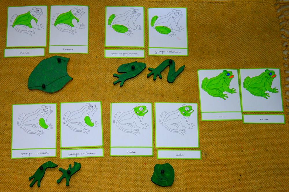 incastro della rana 11